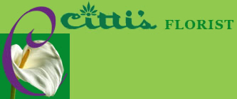 cittis